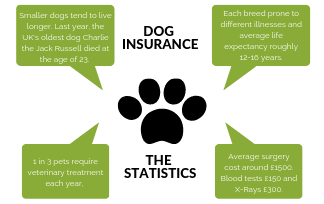 How Dog Insurance Saves You Thousands