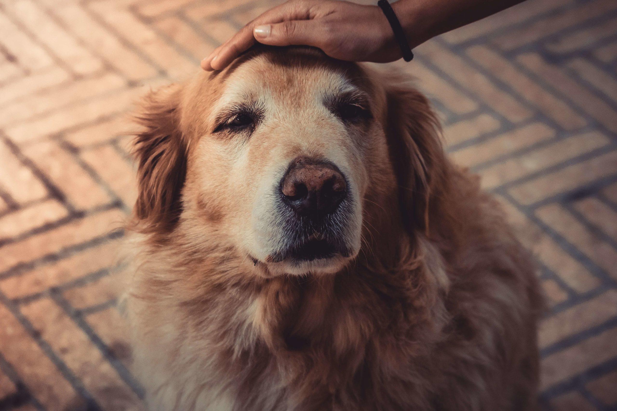 lifetime-cover-pet-insurance