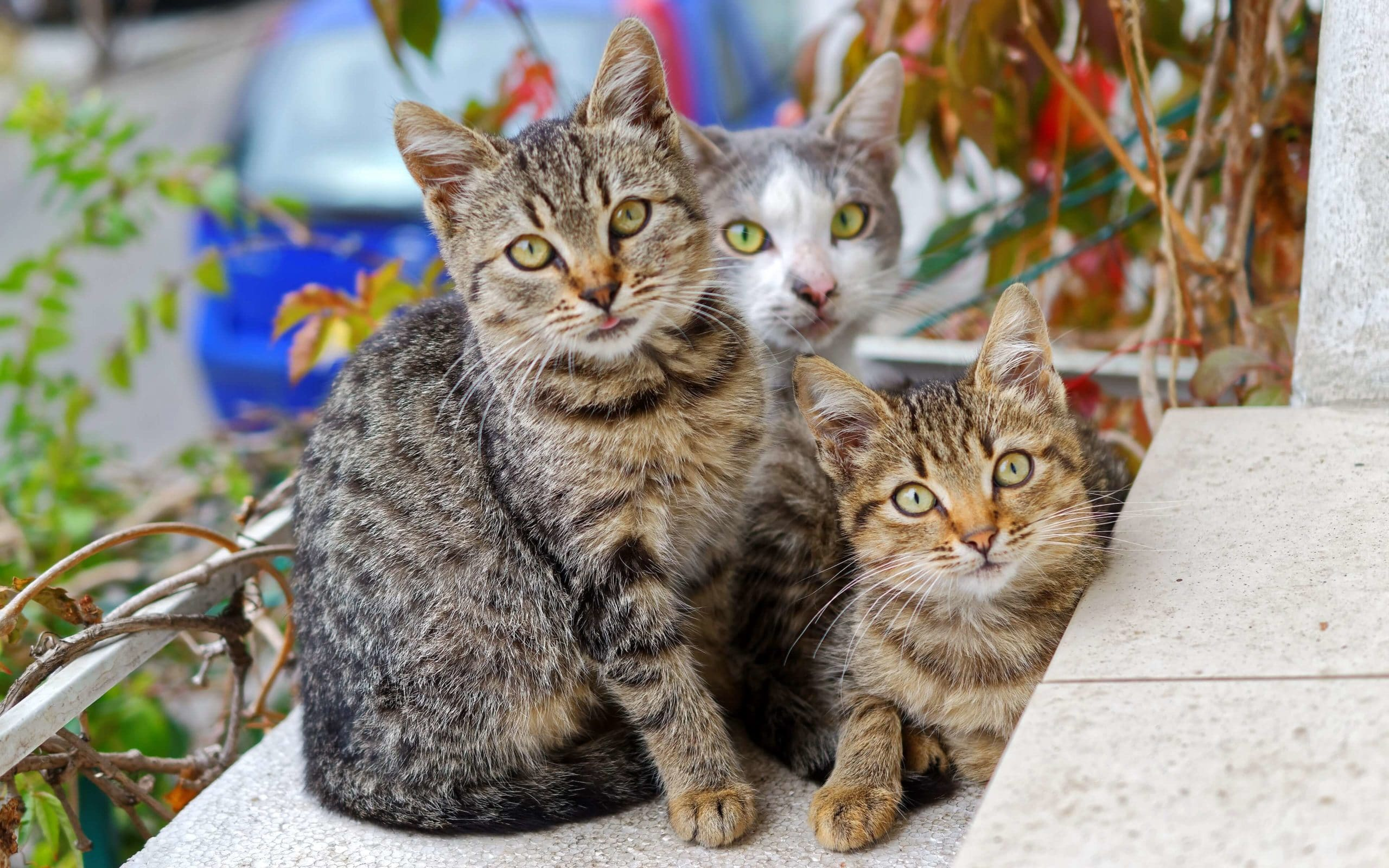 cat-insurance-quotes