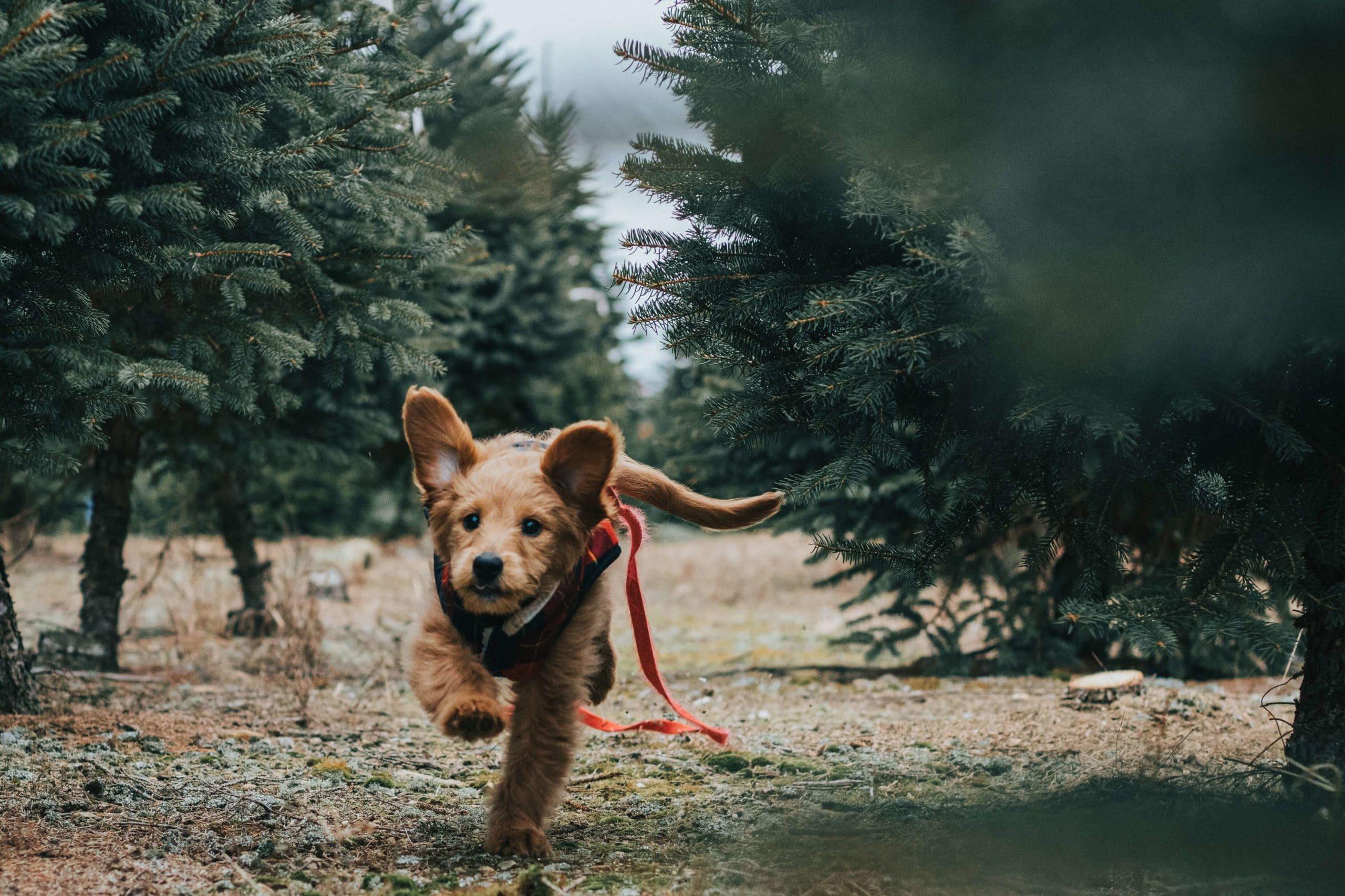 fast-dog-insurance