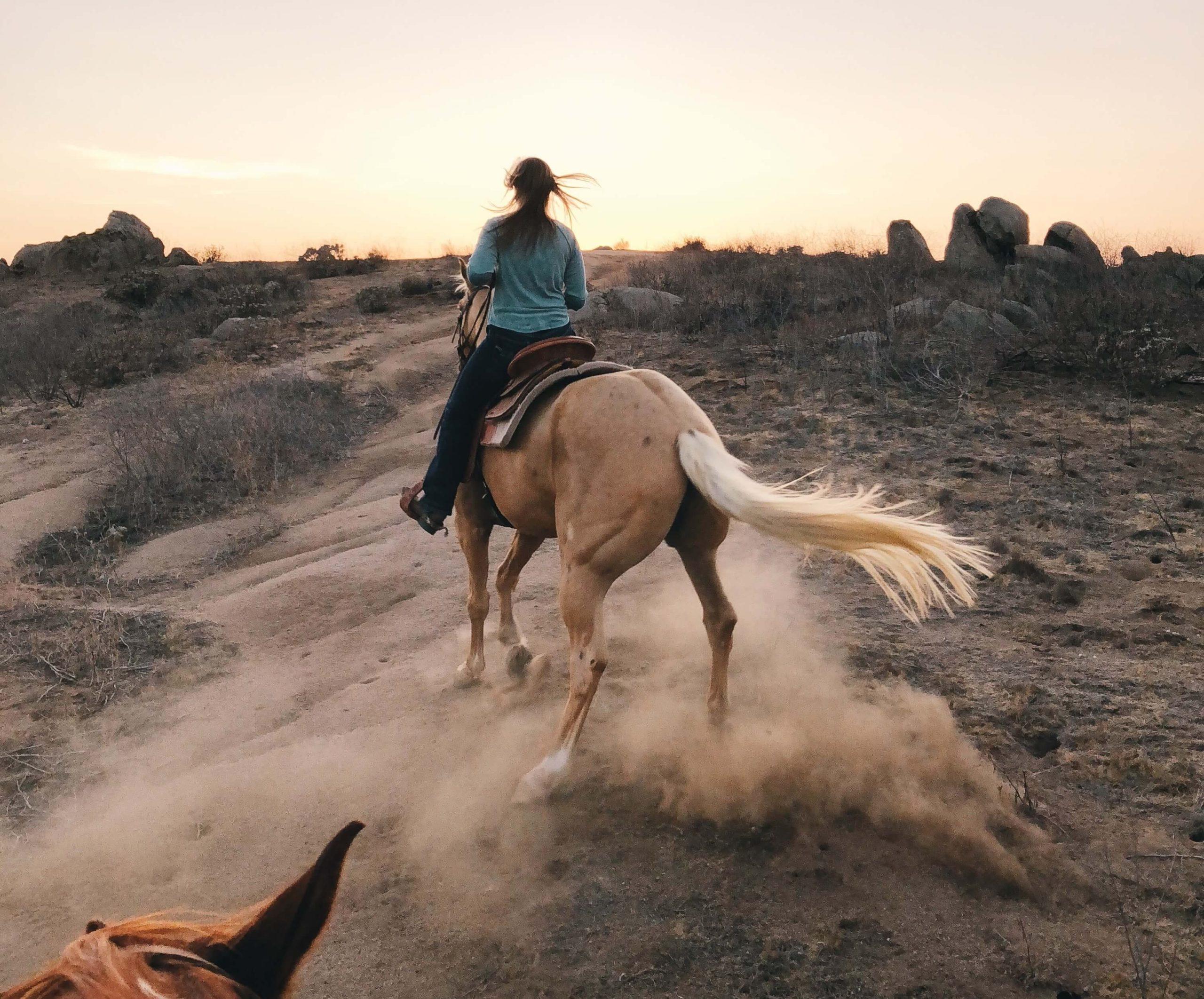 horse-insurance-compare