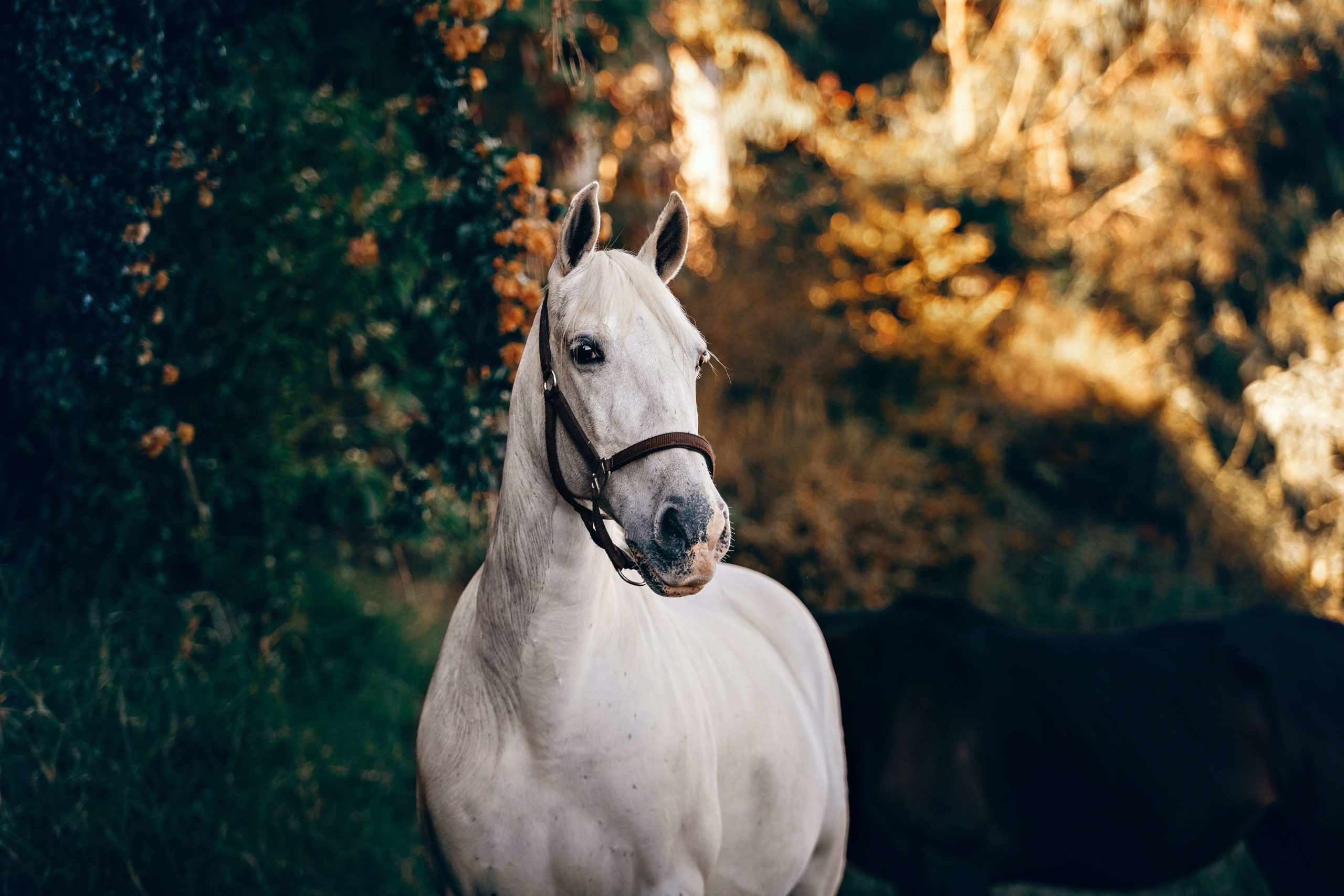 horse-insurance-quotes