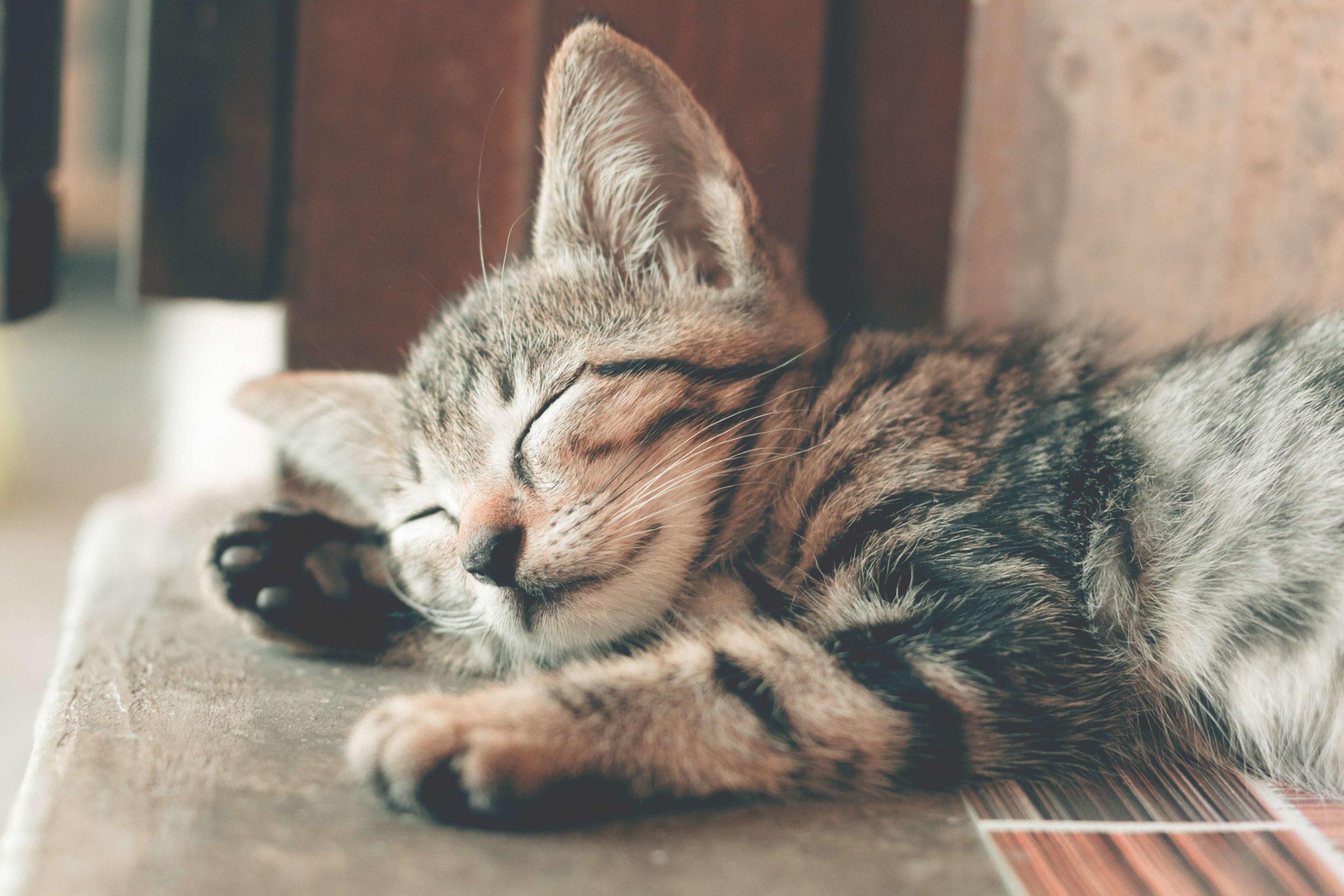 lifetime-pet-insurance-quotes