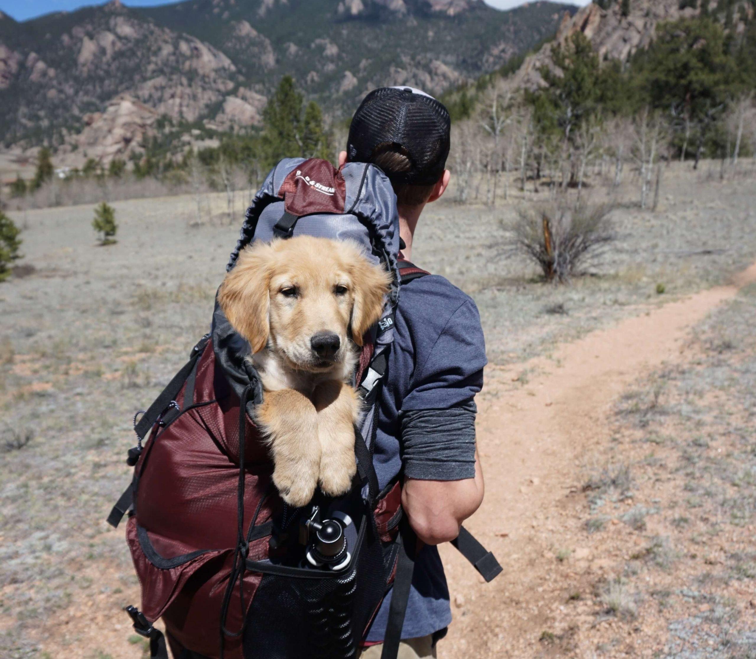 secure-pet-travel-insurance