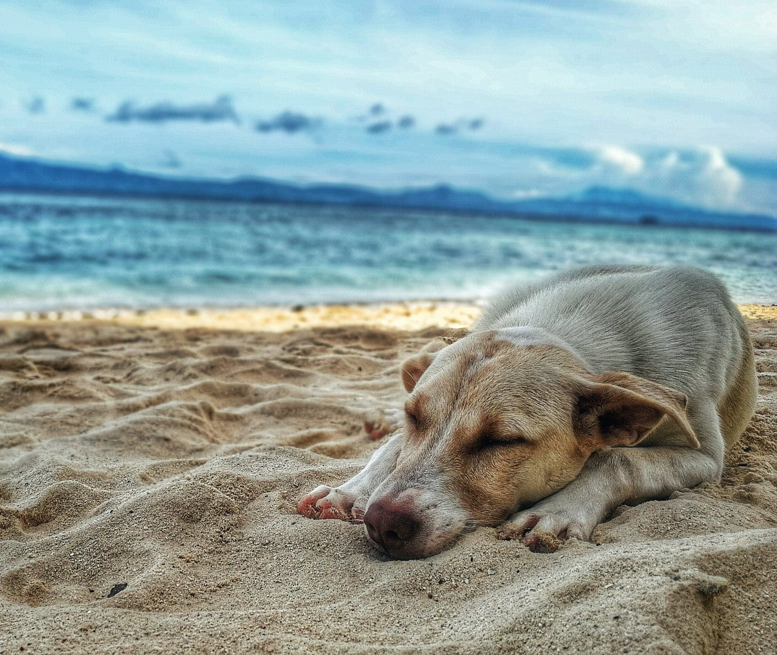 travel-insurance-for-pets