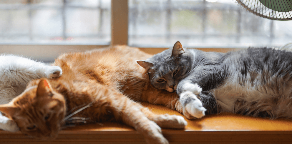 cats-sleeping