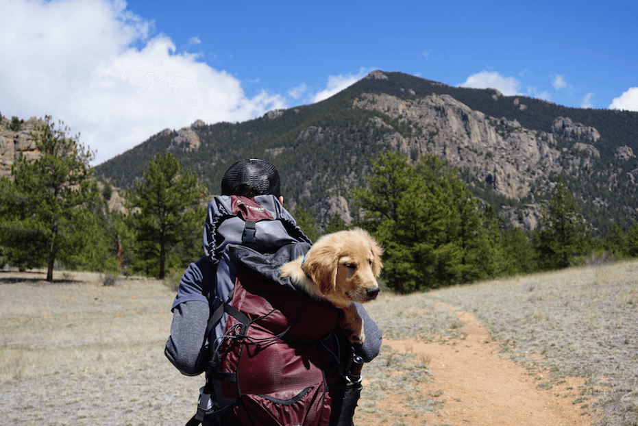 pet-traveling-with-owner