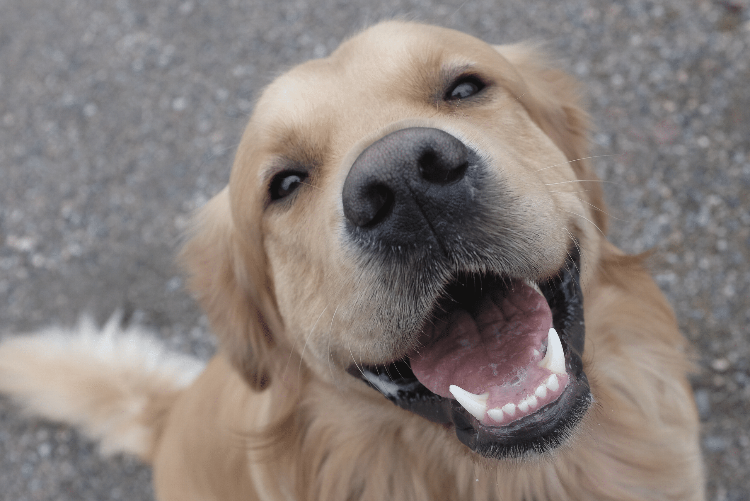 How Many Dogs Are Stolen in the UK Per Year?